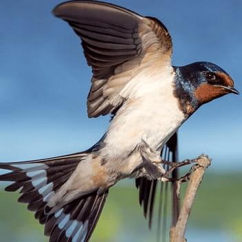 Jerry Jeff Walker Little Bird